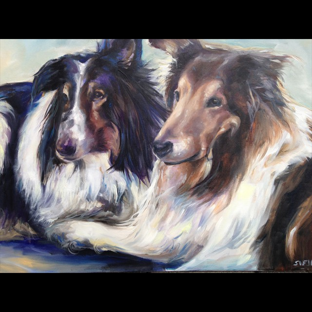 'Collies' by PJ Svejda - Oil
